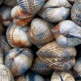 Coquillages et Fruits de Mer